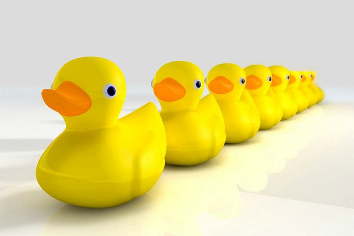 Photo-of-rubber-ducks-in-a-row_web-use